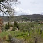 Olive grove of farmhouse I Cipressi near Città di Castello: farmhouse for sale in Umbria, Italy