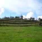 Vineyard terraces of farmhouse I Cipressi near Città di Castello: farmhouse for sale in Umbria, Italy