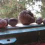 Sant_Antonio_truffles_from_the_garden